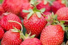 Red Ripe Strawberries With Shalow Depth Of View Royalty Free Stock Image