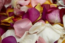 Multi-coloured Petals Of Roses. Stock Images