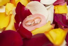 Free Wedding Rings On Pink Petal Of Roses. Stock Photo - 6786300