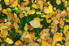 Free Autumn Leaves On Green Grass Royalty Free Stock Photos - 6786378