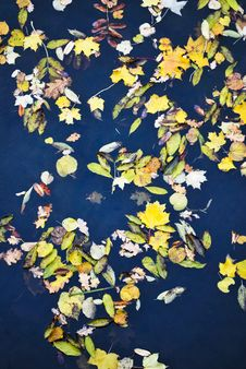 Multicolored Autumn Leaf Royalty Free Stock Photo