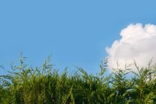 Background Of Cloudy Sky And Grass Stock Image