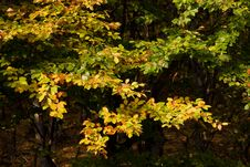 Free Colorful Autumn Leaves Stock Image - 6787671