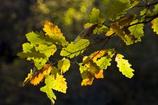 Free Colorful Autumn Leaves Stock Photography - 6787752