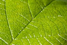 Free Close Up On Green Leaf Stock Photography - 6787772
