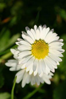 Free Daisy Stock Photos - 6787823