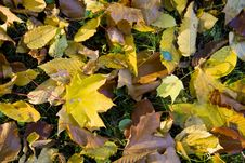 Free Colorful Autumn Leaves Royalty Free Stock Photos - 6787838