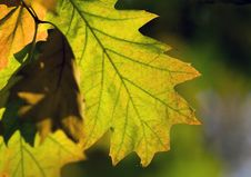 Free Colorful Autumn Leaves Royalty Free Stock Image - 6787866