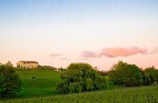 Free Vineyard Sunset Royalty Free Stock Photos - 6787918