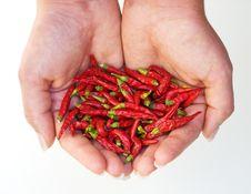 Free Hot Chili Harvest Stock Photo - 6788220