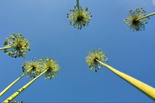 Free High Reed Plants With Seeds Against Sky Stock Photography - 6789022