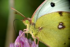 Free Yellow Butterfly On Flower Stock Image - 6789341