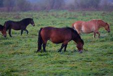 Free Wild Horses Royalty Free Stock Images - 6789629
