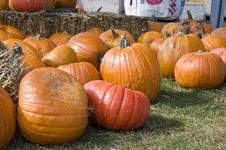 Free Pumkin Patch Stock Image - 6789791