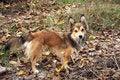 Free Yellow Dog Stock Photo - 6791830