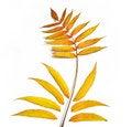 Free Yellow Leaf Royalty Free Stock Photo - 6793155