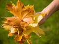Free Bouquet Autumn Leaves In Hand Stock Photo - 6795570