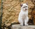 Free Cat Stock Photo - 6796120
