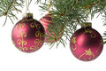 Free Fir Tree Branch With Decoration Royalty Free Stock Images - 6798839