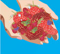 Free Illustration With Hands And Strawberries Royalty Free Stock Photography - 6799077