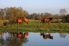 Free A Herd Of Horses Royalty Free Stock Image - 6790026