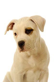 Free Puppy Stock Image - 6790241