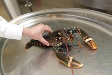 Man Holding Lobster Stock Images