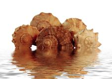 Free Shells In Water Royalty Free Stock Image - 6790986