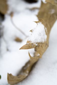 Free Leaf In Snow-3 Stock Images - 6791884