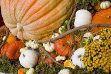 Free Fall Season Pumpkins At Harvest Royalty Free Stock Image - 6793076