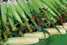 Free Corn On The Cob Royalty Free Stock Photo - 6793605