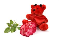 Red Teddy Bear Stock Images