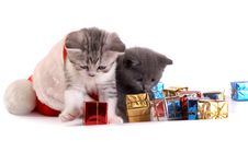Free Kitten Plays On A White Background Royalty Free Stock Photos - 6794778