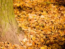Free Autumn Leaves Stock Photo - 6795510