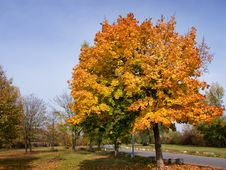 Free Autumn Leaves In Park Royalty Free Stock Photography - 6795557
