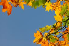 Free Autumn Leafs Stock Photography - 6796032