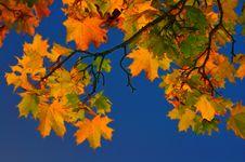 Free Autumn Leafs Royalty Free Stock Photo - 6796045