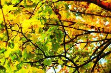Free Autumn Leafs Stock Photos - 6796073