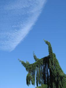 Free Green Tree Stock Photo - 6796370