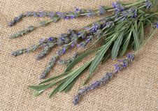 Free Beautiful Lavender Stems On Material Royalty Free Stock Image - 6796416