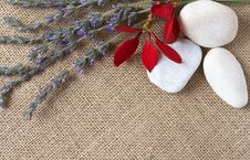 Free Beautiful Lavender And Pebbles Stock Image - 6796581