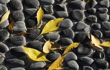 Free Leaf On The Cobble Royalty Free Stock Photo - 6796605