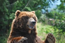Free Bear S Arms Royalty Free Stock Images - 6796859
