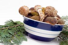 Free Raw Fresh Mushrooms Stock Photos - 6797043