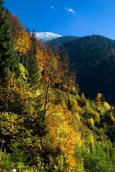 Free Autumn Landscape In Mountain Stock Photos - 6797393