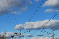 Free On Wire Stock Photo - 6797650