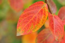 Free Fall Leaves Royalty Free Stock Photos - 6799818