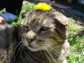 Free Cat With Flower Stock Image - 681241