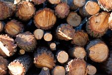 Sunny Side View Of A Pile Of Logs Stock Photos