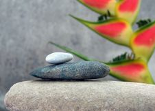 Free Still Life With Tropical Flower Royalty Free Stock Image - 681556